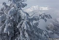 Frosty Pines Snowbasin 011217 0361