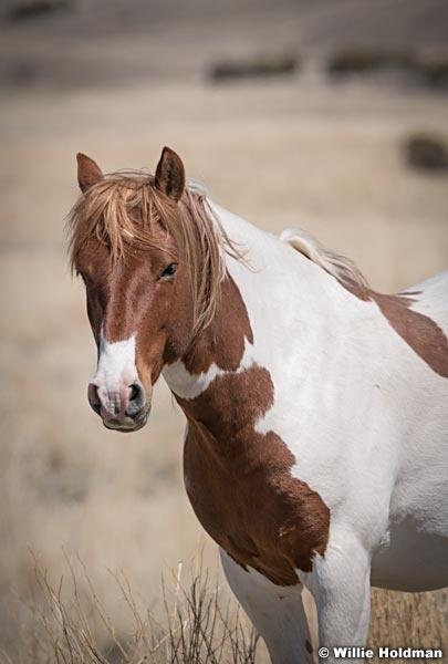 Wild Horses Paint t 040320 0965