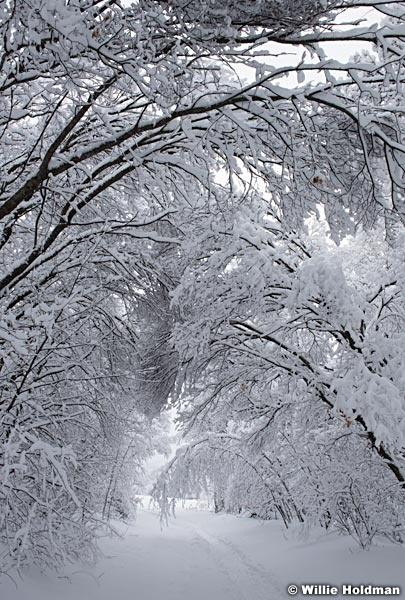Snow Path Trees 010517 4
