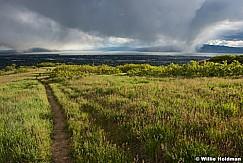 Spring Greens Utah Valley 051717 9285 2
