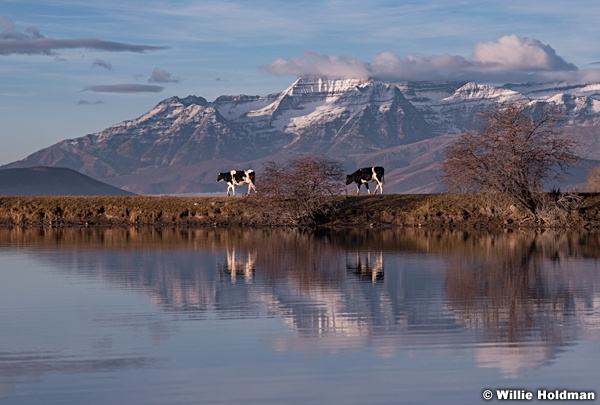 Two Cows Reflection Timpanogos 021217 0395