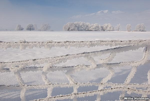 fencefrost013009 15910