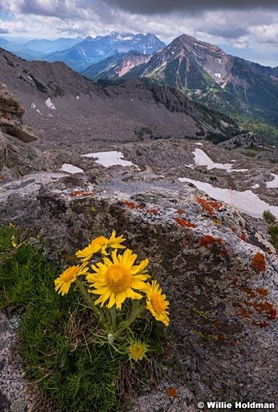 High Mountain Daisies 061918 4087 2