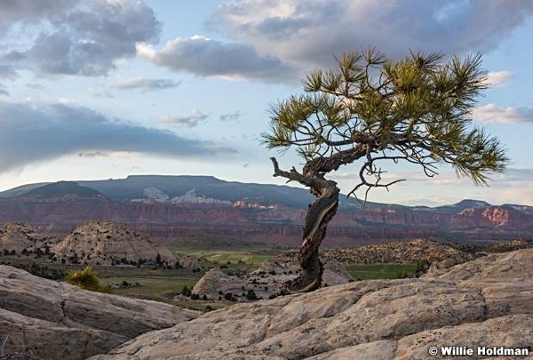 Teasdale Tree 052716 8470