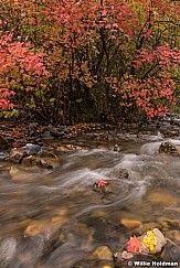North Fork Stream 100818 9145 3