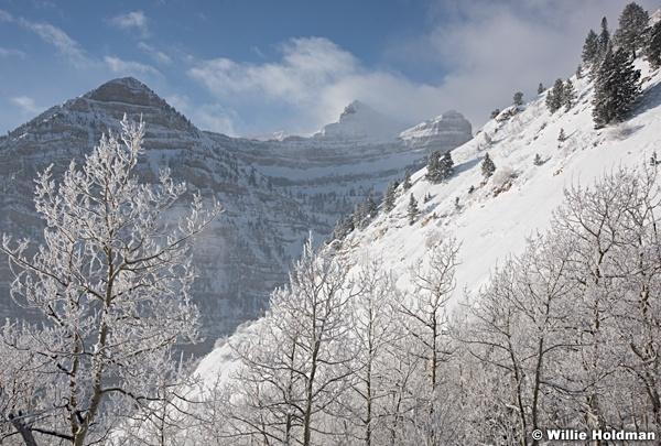 Timpanogos frosty trees 122915 3