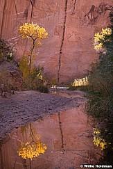 Cottonwood reflection 102519 09661