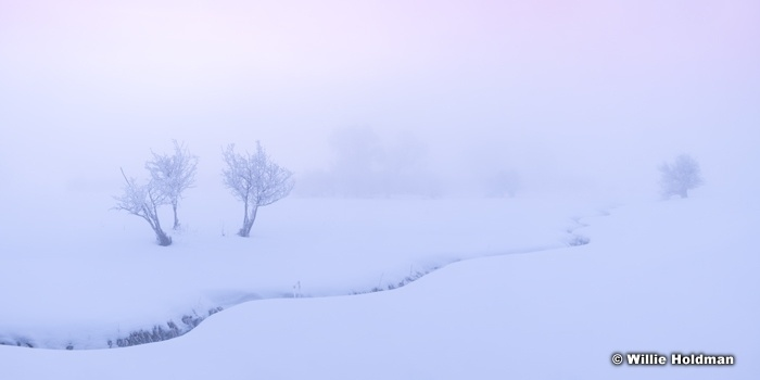 Mystical Winter Morning 021219 7503