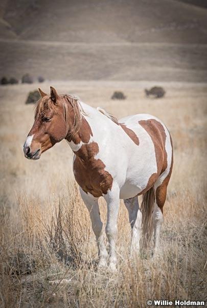 Wild Horses Paint t 040320 2