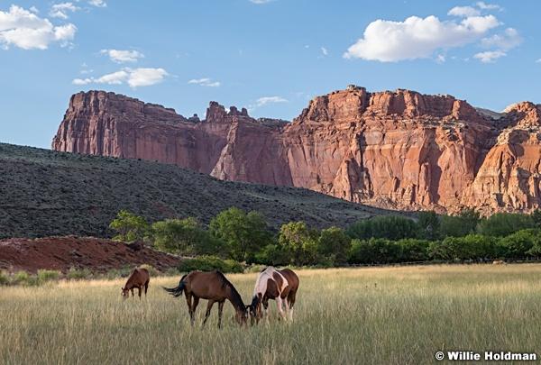 Capitol Reef Horses 081120 4920 2