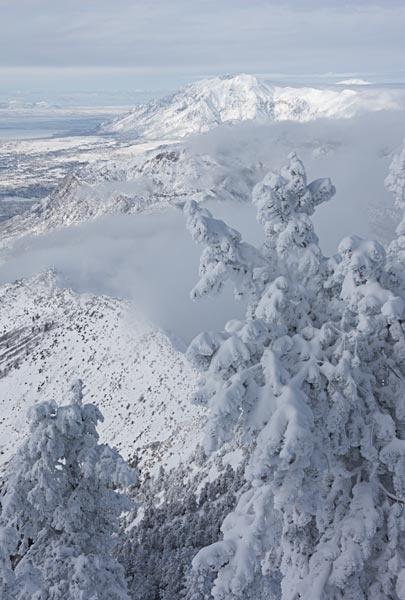 Frosty Pines Snowbasin 011217 0383