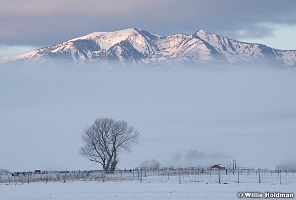 Soft Winters Morn 122120 5879 5