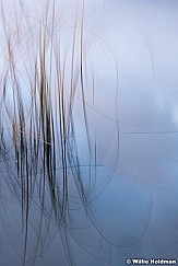 Abstract Grasses 111718 8332 4
