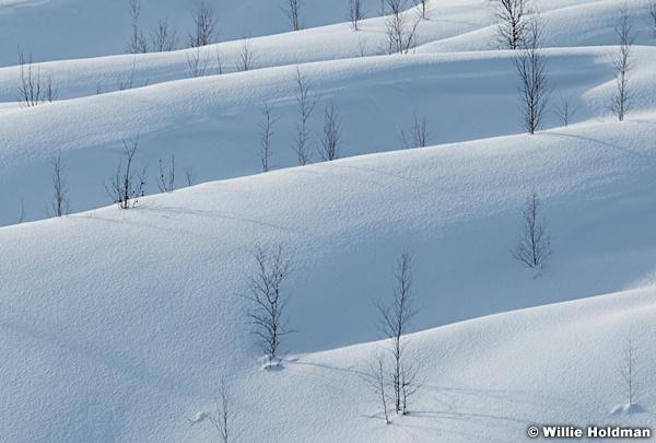 Snow Ridges 030618 4591