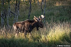 Two Moose Side by Side 092619 2358