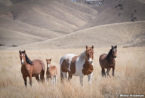 Wild Horses Paint 040320 0835 2