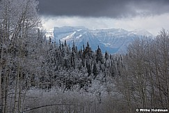 Frosty Trees Timp 111716 2855 4