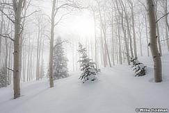 Soft Winter Snow 010117 7781