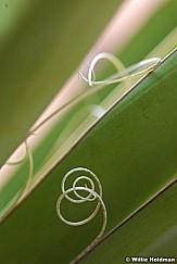 plant pods032109 13817