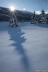 Shadow Pine 011417 1550