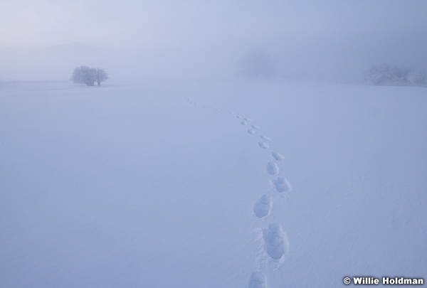 Frozen creek Sunrise 021219 7580