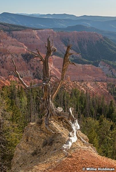 Cedar Breaks Bristlecone Pine 071820 2347 2