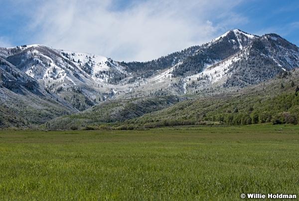 South Fork Spring Snow 051717 8850