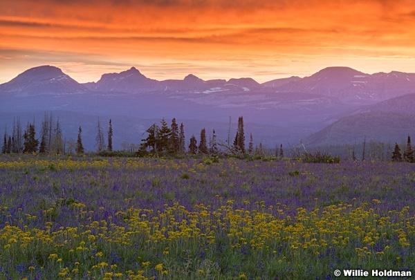 Uinta Red Sunrise Wildflowers 062620