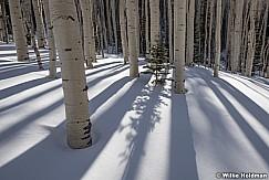 Pine tree sunburst 030917 0013