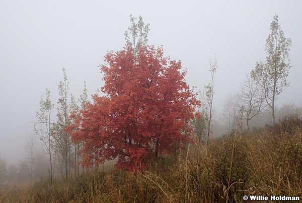 Maple Fog 092216 5012 2