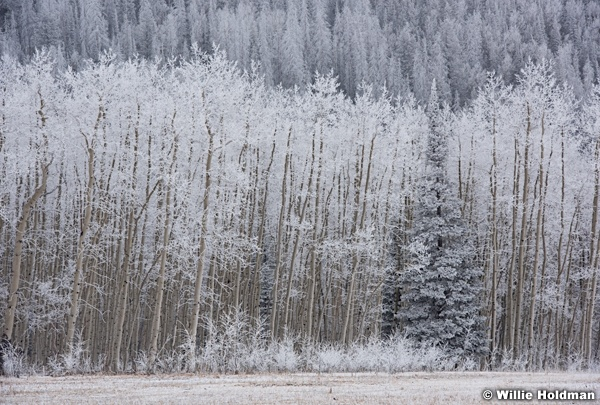 Frosty Trees Wasatch 111716 2894 3