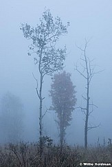 Maple fog 092216 4