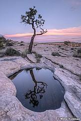 Lone Tree Reflection 060419 2414 2