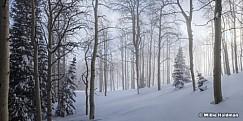 Misty Winter Aspens 010117