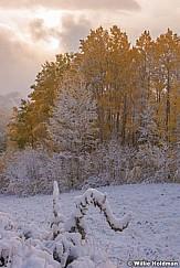 Autumn Aspen Snow 092316