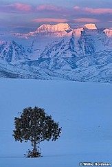 Winter Pasture Timpanogos 021719 021719VERT