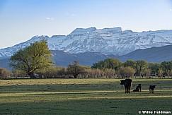 Spring Green Pasture Heber 050219 7706 2