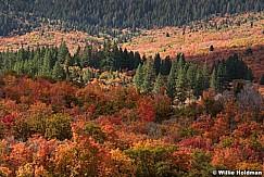 Payson Canyon Autumn 100417 8742
