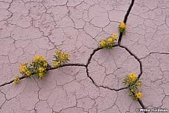Desert Bloom 050814 8194