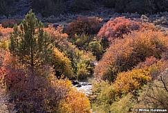 Colorful Foilage Gunnison 101613 2404 2