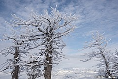 Frosty Pines Snowbasin 011217 0478
