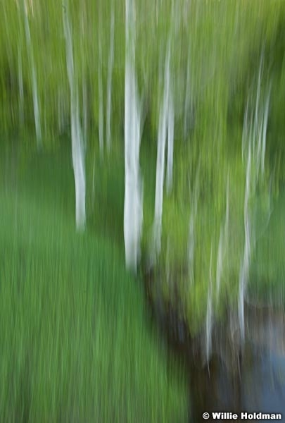 Green Aspen Abstracts 062010-0638