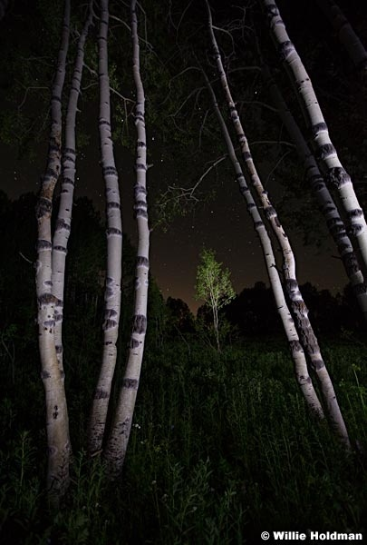 Night Aspen Stars 070111 35