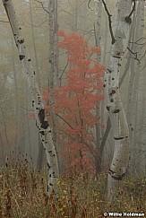 Maple fog 092216 4844 5