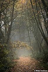 Misty Path Oregon 102616 7242