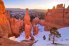 Bryce Canyon Tree 020215 7821