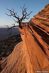 Vermillion Cliffs Tree 052316 7079
