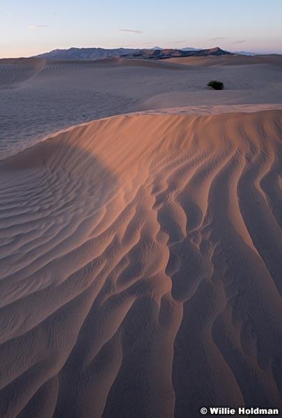 Sahara Sand Dunes 082618 7715 2
