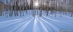 Aspen Winter Shadows