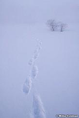 Winter Tracks 021719 7559